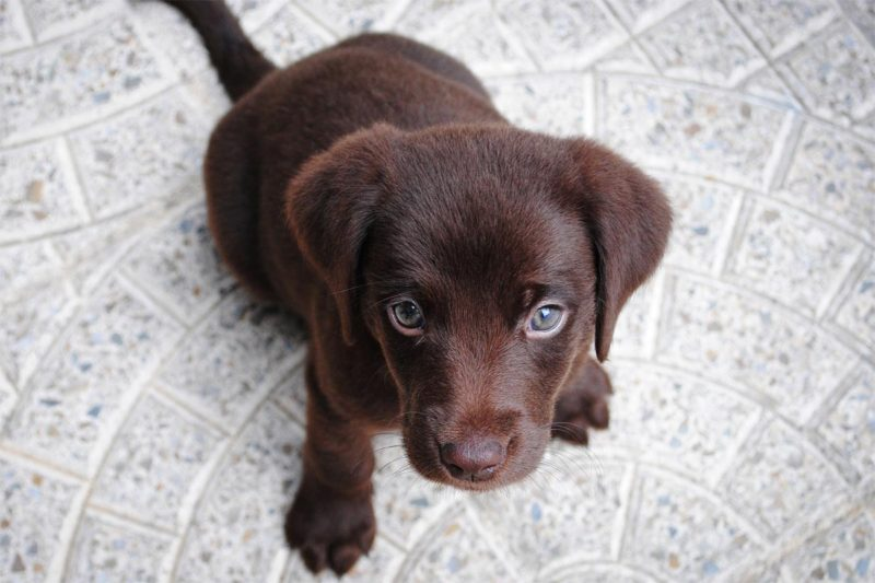 仔犬に添加物のドッグフードは危険